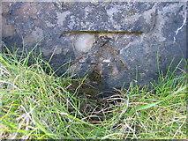 SJ1888 : Damaged bench mark on Hilbre Island by John S Turner
