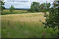 NZ5316 : Farmland near Spring Clump by Stephen McCulloch