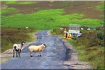 SE8098 : Wheeldale Road by Mick Garratt