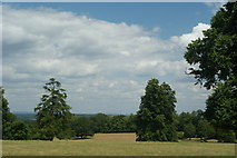 TQ1352 : Parkland at Polesden Lacey, Surrey by Peter Trimming