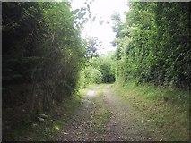 ST0642 : Old track leading to St Decuman's church by Sarah Charlesworth