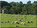 NY7708 : Intensive sheep farming near Hartley by Stephen Craven