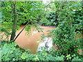 SO5013 : River Monnow by Jonathan Billinger