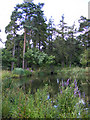 TL1313 : Southdown Ponds on Harpenden Common by Adrian Cable