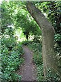 TL0652 : In the spinney by Mowsbury Park by Rich Tea