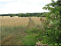 TM3193 : Path to Ditchingham by Evelyn Simak