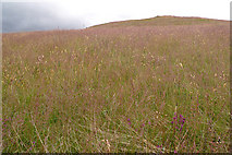 NN8444 : Moorland grasses by Rob Burke