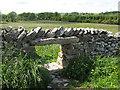 NY7004 : Sheep creep near Beckstones by Stephen Craven