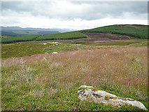 NN8444 : Moorland and forestry by Lis Burke