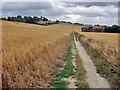 TQ9351 : The Pilgrim's Way near Cobham Farm by Andy Stephenson
