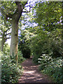 TL2302 : Path in Furzefield Wood by Adrian Cable