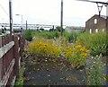 SJ9297 : Wildflowers at Guide Bridge by Gerald England