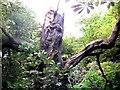 SP9113 : Treebeard striding through the wood at Tringford Reservoir by Chris Reynolds