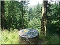 SN7642 : Mosaic in Cwm-y-Rhaiadr Forest by John Light