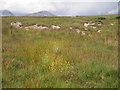 NR5674 : Stony rushy meadow along the farm track by C Michael Hogan