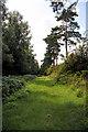 TF8105 : Woodland track near Brake Hill by Bob Jones
