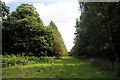 TF8105 : Woodland ride near Brake Hill by Bob Jones