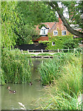 TG2902 : The village pond in Yelverton by Evelyn Simak
