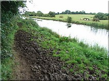 N7441 : A right royal mess of a towpath on the Royal Canal near Enfield, Co. Meath by JP