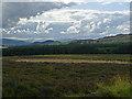 NN9124 : Low Moor Wood by Dr Richard Murray
