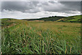 SW8566 : Pasture at Mawgan Porth by Kate Jewell