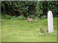 TM4160 : Rabbits in the churchyard of St Mary Magdalene Church by Adrian Cable