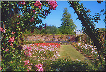 TQ1352 : Rose Garden at Polesden Lacey by Stephen Craven