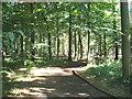 SP8808 : Wendover Woods by Roger Cornfoot