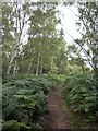 TQ2272 : Path on Wimbledon Common by Derek Harper