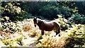 SU2913 : New Forest Pony by Val Pollard
