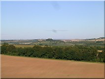 SU4827 : St Catherine's Hill from Compton Down by James Hardiman