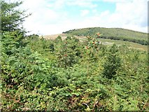 J3530 : View across woodland in the Tullybranigan valley towards the Tollymore Forest by Eric Jones