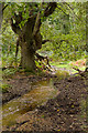 SU2706 : Warwickslade Cutting: the stream flows by Peter Facey