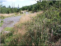 J3630 : Forest track leading eastwards in the direction of Greenhill by Eric Jones