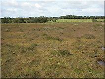 SY9485 : Stoborough Heath, mire by Mike Faherty