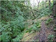 SE0722 : Footpath, Maple Dean Clough by Humphrey Bolton
