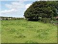 S6004 : Pasture  near Perry's Bridge by David Hawgood