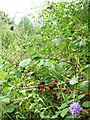 TR0656 : Brambles in Joan Beech Wood by Stephen Craven