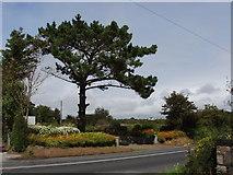 S6701 : Roadside tree and flowers near Ballymabin by David Hawgood