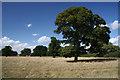 TL9059 : Parkland at Bradfield St George by Bob Jones