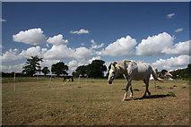 TL9159 : Paddock at Hollybush Corner by Bob Jones