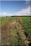 TL9159 : Overgrown footpath at Maypole Green by Bob Jones