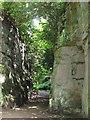 NZ0878 : Belsay Hall - Quarry Garden (3) by Mike Quinn