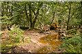 SU2606 : Warwickslade Cutting: fallen beech tree by Peter Facey