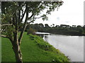 NU2406 : The River Coquet upstream from Warkworth by Dr Duncan Pepper