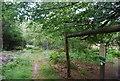 TQ5835 : Deer proof fence by the Tunbridge Wells Circular Path, Eridge Park by N Chadwick