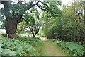 TQ5834 : Tunbridge Wells Circular Path by Eridge Old Park by N Chadwick