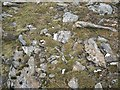 NN3744 : Vegetation, Beinn a' Chreachain by Richard Webb