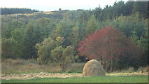 G8780 : Haystack and Rowan by louise price