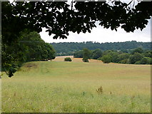 SJ5728 : View from Hawkstone Park entrance by Chris Gunns
